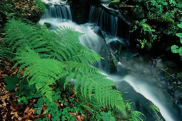 fotografie - Romance horského potoka