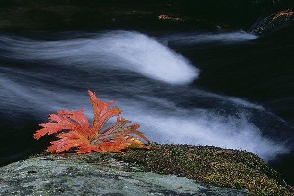 fotografie - Čas podzimní