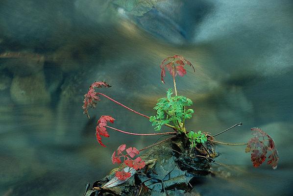 fotografie - Podzimní etuda