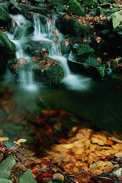 fotografie - Kouzelný listopad