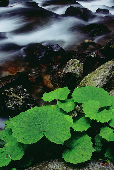 fotografie - Kouzlo horského potoka