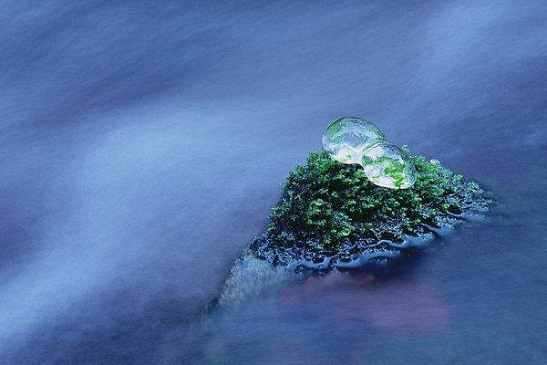 fotografie - Ledoví trosečníci