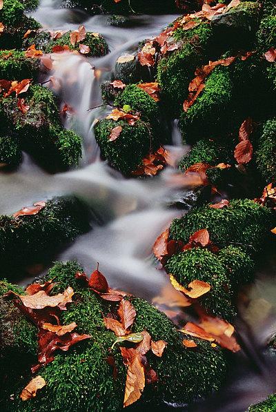 fotografie - Sonáta podzimu