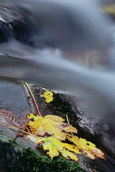 fotografie - Čas podzimního protisvětla