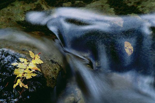 fotografie - Ztichlá melodie podzimu