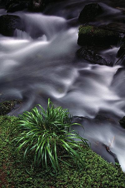 fotografie - Largo horského potoka II