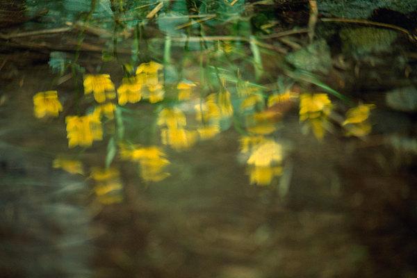 fotografie - Radostné chvění jara