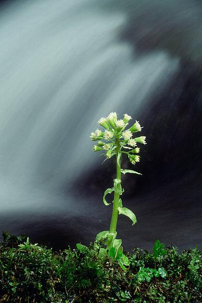 fotografie - Životodárná moc jara I