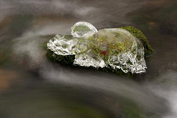 fotografie - Želva