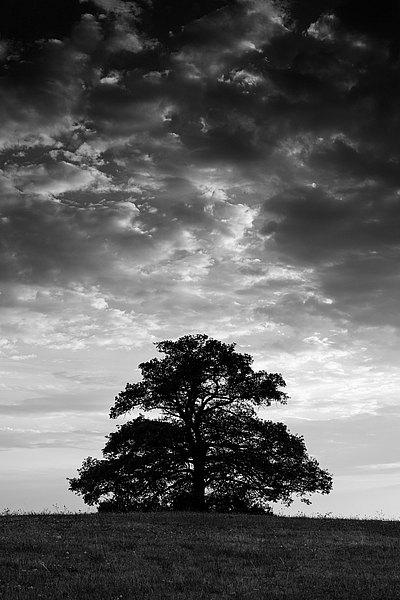 fotografie - Věkovité zamyšlení