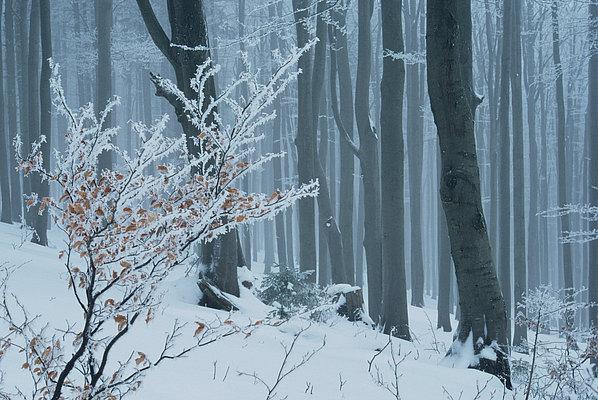 fotografie - Zimní pohádka