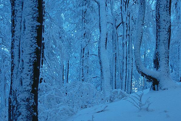 fotografie - Symfonie zimního lesa