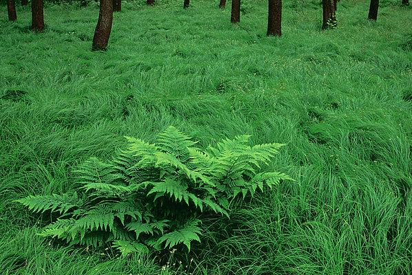 fotografie - V učesaném lese