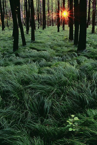 fotografie - Lesní ukolébavka