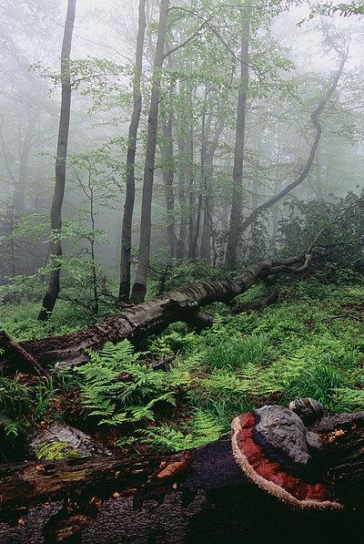 fotografie - Májový prales