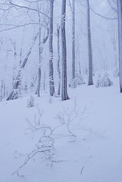 fotografie - Kompozice mrazivého lesa I