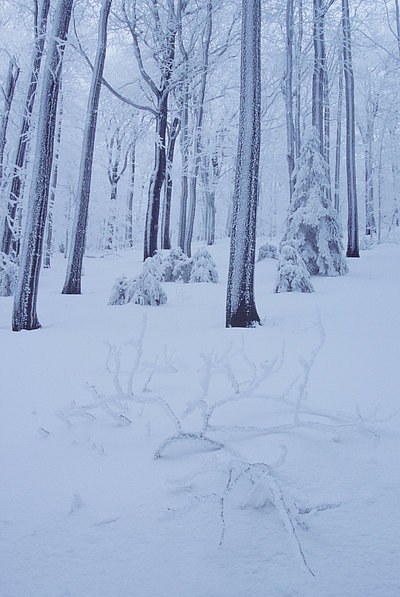 fotografie - Kompozice mrazivého lesa II