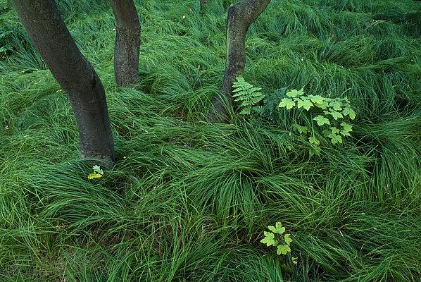 fotografie - Zátiší tančícího lesa