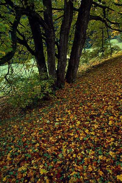 fotografie - Podzimní impresionismus