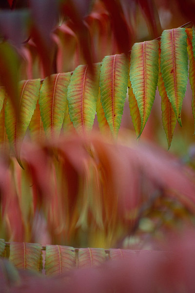fotografie - Podzim posetý barvami III