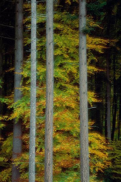 fotografie - Snová podzimní