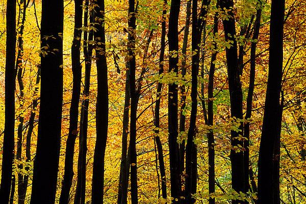 fotografie - Vábení lesního protisvětla