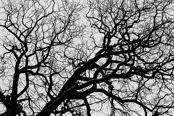 fotografie - Větvoví života II