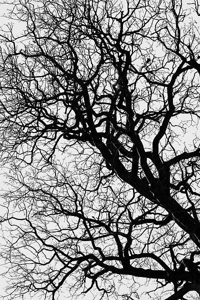 fotografie - Větvoví života IX