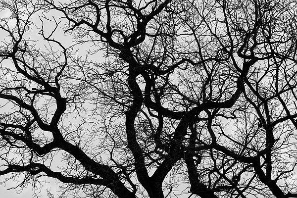 fotografie - Větvoví života III