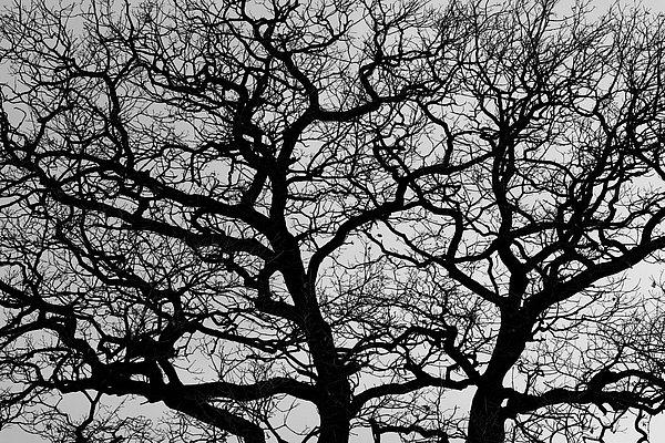 fotografie - Větvoví života IV