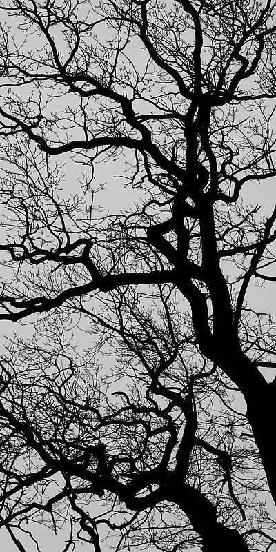 fotografie - Větvoví života XI