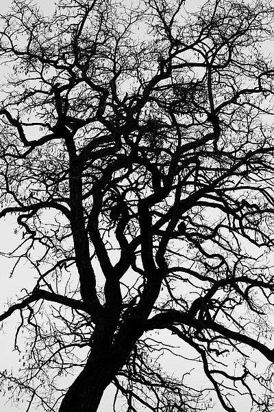 fotografie - Větvoví života XIV