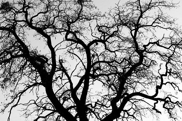 fotografie - Větvoví života VIII
