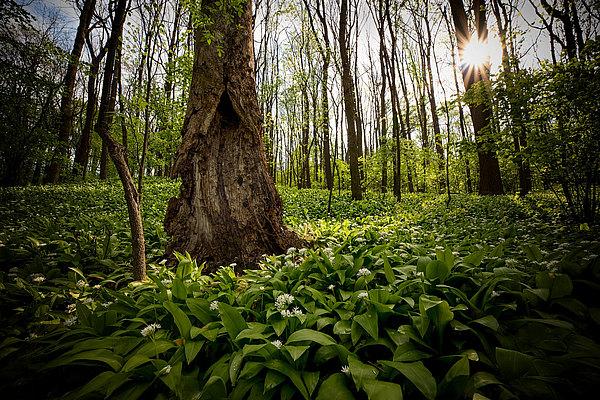 fotografie - Choreografie lužního lesa