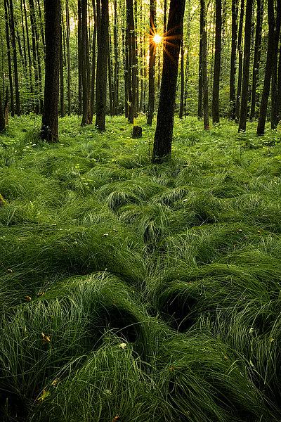 fotografie - Mlčící les I