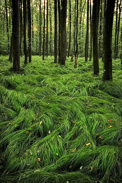 fotografie - Mlčící les III