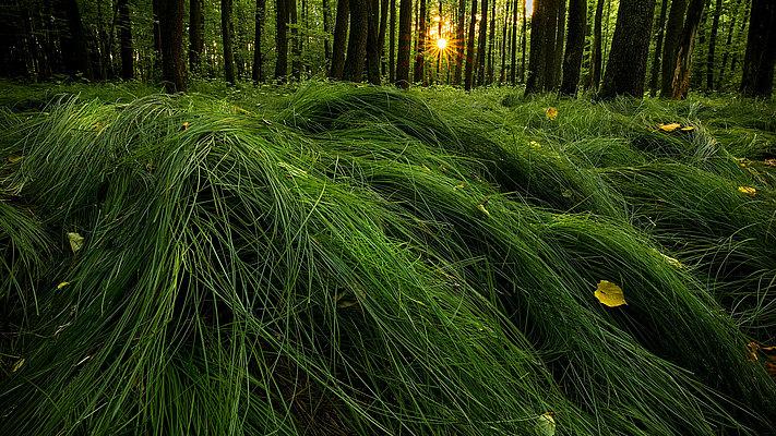 fotografie - Minimalismus lesních hvozdů II