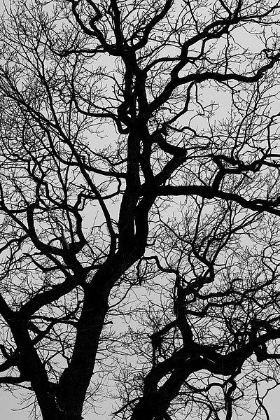 fotografie - Větvoví života X
