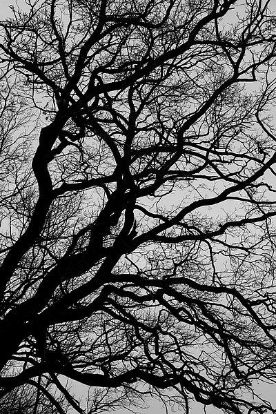 fotografie - Větvoví života XII