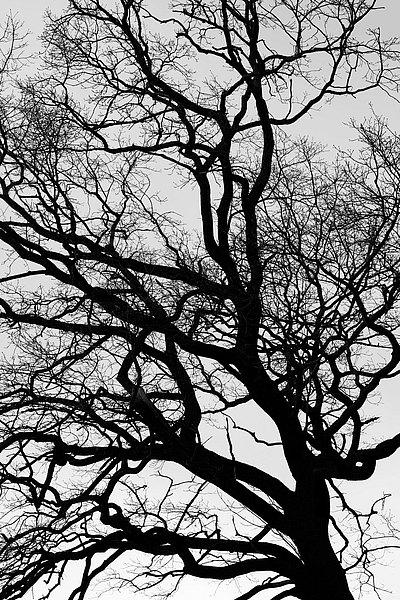 fotografie - Větvoví života XIII