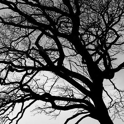 fotografie - Větvoví života V