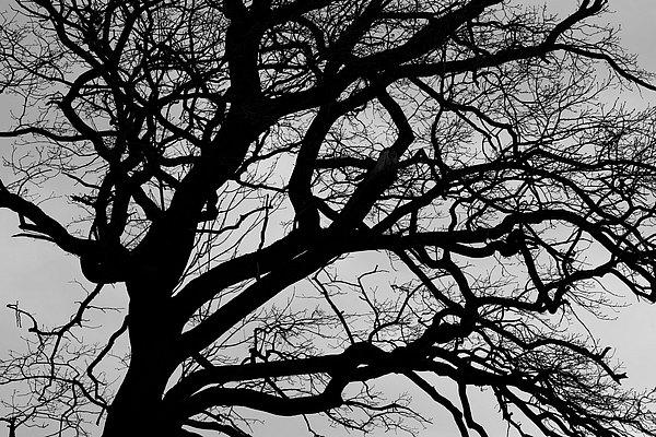 fotografie - Větvoví života VI