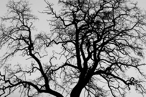 fotografie - Větvoví života VII