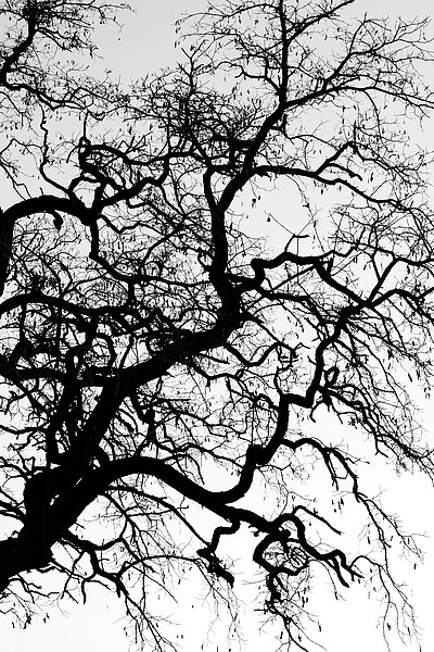 fotografie - Větvoví života XV