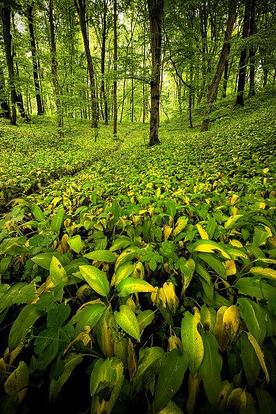 fotografie - Proměny lužního lesa