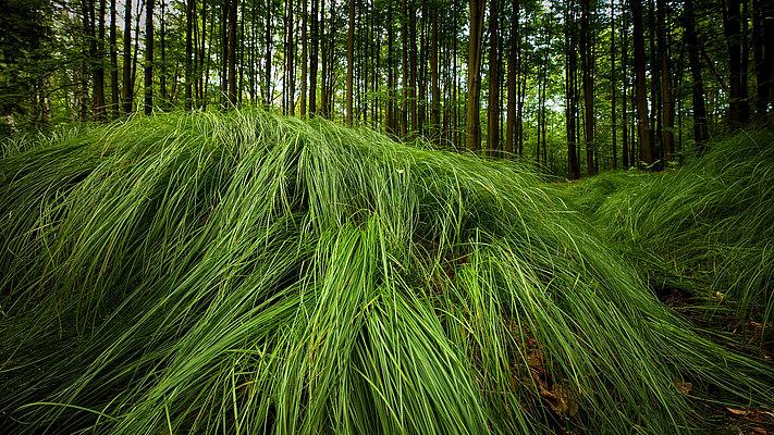 fotografie - Minimalismus lesních hvozdů I