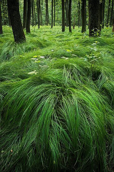 fotografie - Mlčící les II