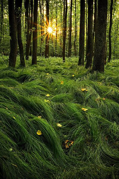 fotografie - Mlčící les IV