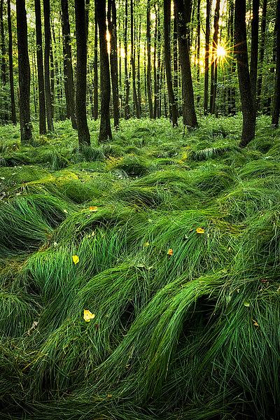 fotografie - Mlčící les V