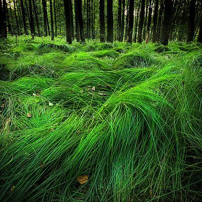 fotografie - Minimalismus lesních hvozdů III